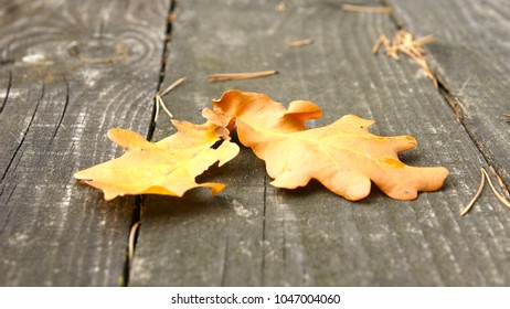 Oak leaves on a wooden table. Autumn