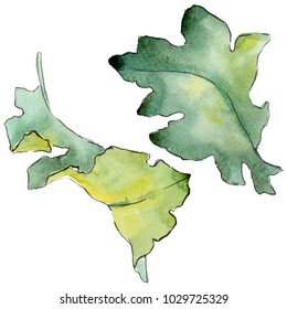 Oak leaves in a watercolor style isolated. Aquarelle leaf for background, texture, wrapper pattern, frame or border.