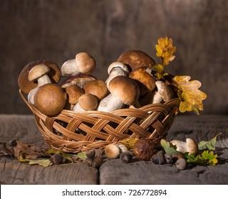 Oak mushrooms in the basket, acorns and oak leaves over wooden background. Autumn cep mushrooms.Porcini, wild mushrooms. Cooking delicious organic mushroom ingredient