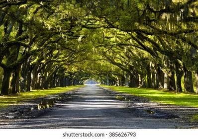 Oak road plantation, Georgia, USA