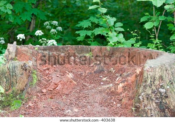 Oak stub