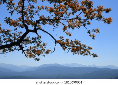 Oak tree branch with autumn red leaves on mountains and blue sky background
