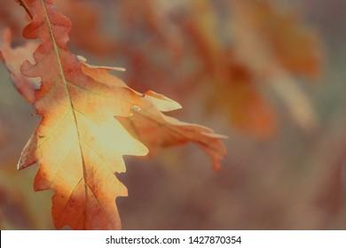 oak tree branch, high key photo effect