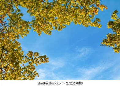Oak tree branches with autumn foliage in sunlight against blue sky