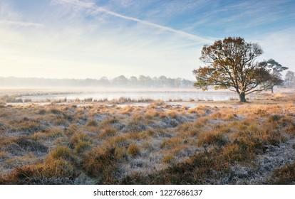 oak tree by lake on misty frosty autumn morning