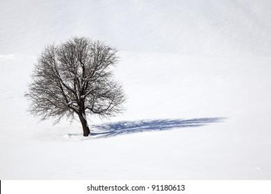 Oak tree in a field of snow in winter