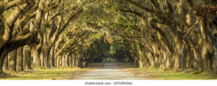 Oak tree lined road in Savannah, Georgia.