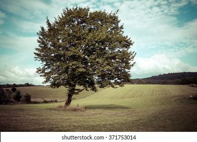 an oak tree in a meadow with pastels