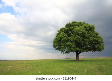 Oak tree with new leaf growth in early spring standing alone in a field, dog standing next to it on a cloudy sky with copy space