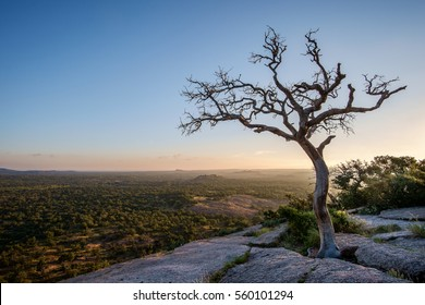 Oak Tree on Enchanted Rock viewing the valley