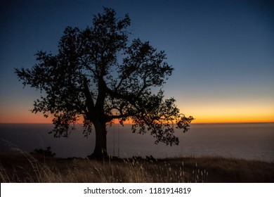 Oak tree silhouetted against a colorful horizon just after the sun sets over Pacific Ocean