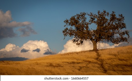 Oak tree in the storm clouds