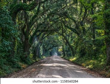 Oak Tree Tunnel Dirt Road to Botany Bay Plantation in Editso Island South Carolina SC near Charleston.