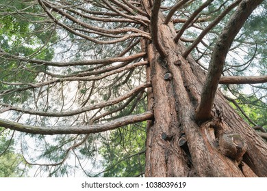 Oak tree under view against sky, natural landscape