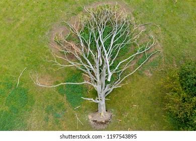 Oak tree uprooted aerial