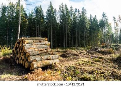 Oak tree woodpile in the forest in fall season