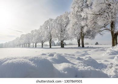Oak trees covered with hoarfrost, seen near Ebersberg, Bavaria, Germany