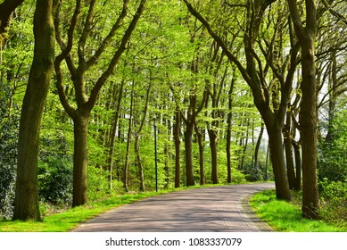 Oak trees lane in province of Drenthe, The Netherlands