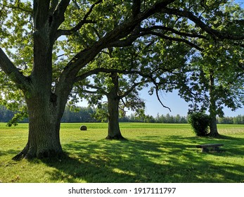 Oak trees on a green lawn, a wooden bench under them, a beautiful summer sunny day