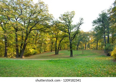 Oak trees on the meadow in autumn season