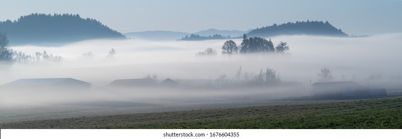 oak trees silhouettes on a farm surrounded by fog on a clear morning in an agricultural area near Jefferson, Oregon