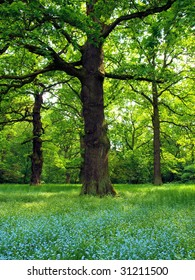 Oak trees with veronica flower