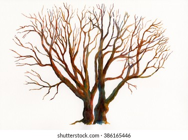 Oak Trees in Winter.  Watercolor hand painted oak trees in winter without leaves. Abstract design with colorful branches.