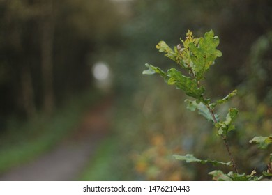 An Oak twig in the foreground of a pathway disappearing into the distance. [Room for Text]