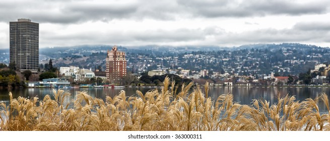 Oakland, CA view across Lake Merritt and hills, with selective focus on golden dried plants in the foreground.