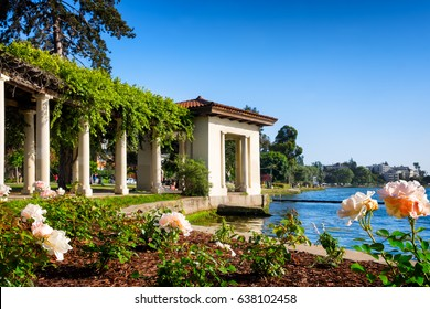 Oakland, California, Lake Merritt historic rose arbor. Selective focus on the foreground flowers. Copy space