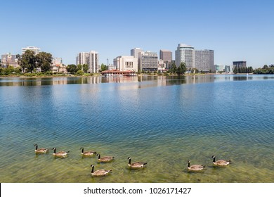 Oakland viewed across Lake Merritt, with geese in the foreground