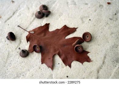 oak-leaf and cups