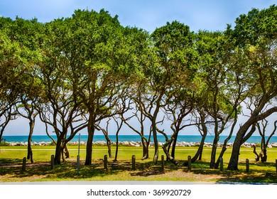 Oaks line the shore at Fort Fisher museum near Kure Beach, North Carolina.