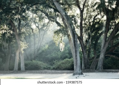 Oaks with Spanish Moss and rays of light reflecting off morning fog