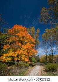 Oakville park in the fall, Ontario, Canada