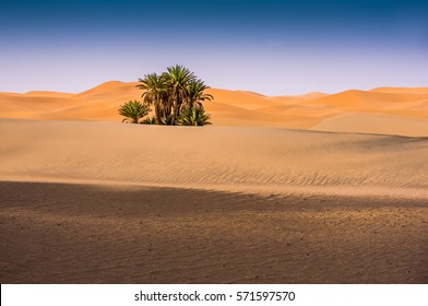 Oasis in the desert, Merzouga, Morocco