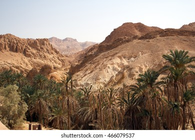 oasis in the desert mountains