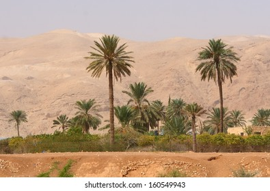 Oasis in a desert in Palestine