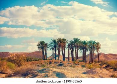 Oasis in desert. Palm trees grove in desert. Wilderness