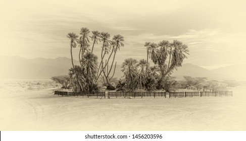 Oasis with Doum Palms (Hy?pha?ene thebaica). Desert vegetation in the Arava Valley (Wadi El Arabah) near the Israel Jordan border, Israel (stylized retro)