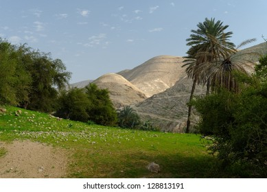 Oasis in Judean Desert at Wadi Qelt near Jericho in spring