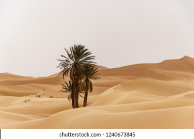 Oasis at the moroccan desert dunes