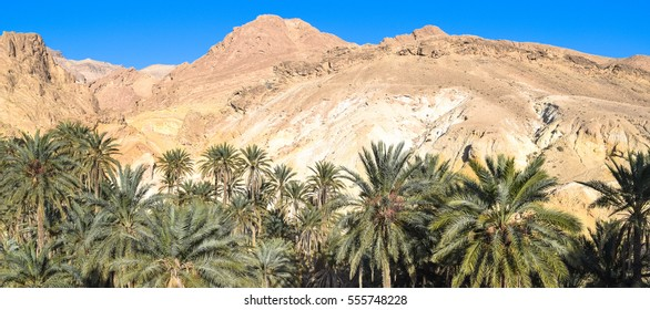 Oasis in the mountains of Tunisia. Palm trees under the blue sky