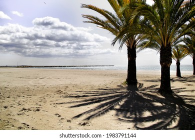 Oasis of palm trees on the beach in Santa Pola village, southern Spain in a cloudy day of Spring - Shutterstock ID 1983791144