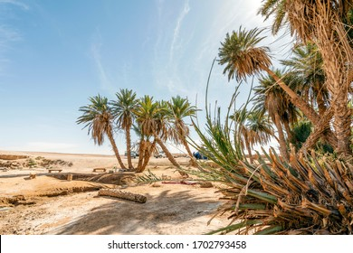 Oasis with palm trees on Sahara dessert, Africa