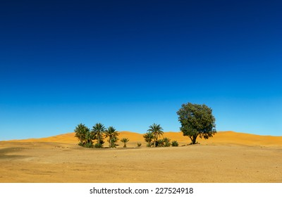 Oasis in the Sahara desert in Morocco