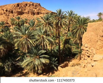 Oasis of Taghit near by the Sahara Desert in Algeria.