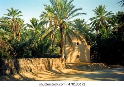 Oasis, Tozeur, Tunisia