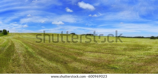 Oat agricultural field with a crop