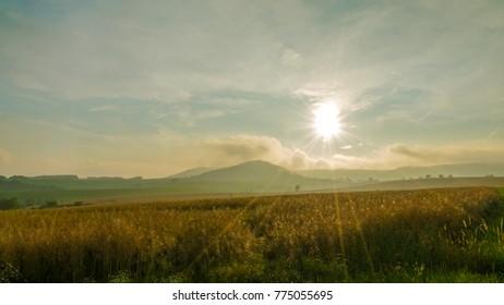 oat field with backlight